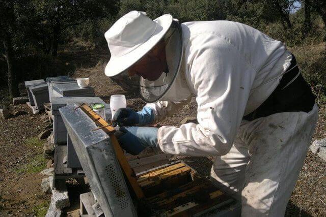 orgoitas en colmenas de abejas